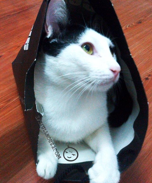 Beg Kertas 01