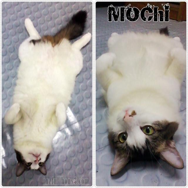My Dear Sweet Mochi
