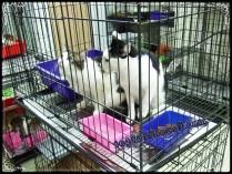 Mochi - Uiks, atas sana pun ada meow